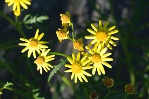 More wild flowers