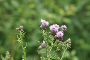 Tiny little thistles.