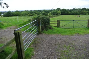 Public footpath - through the paddock with the horses