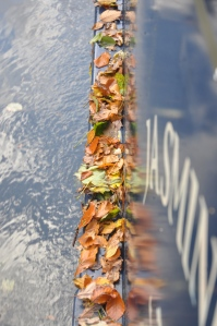 Leaves on the gunnels from inside the lock.