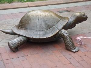 The tortoise....