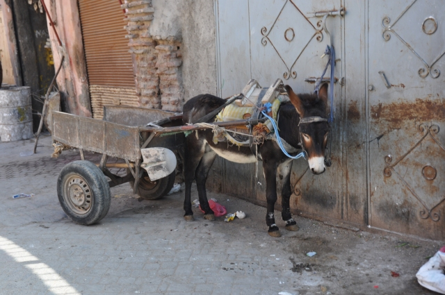 Local transport.